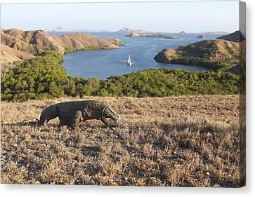 Komodo National Park Canvas Print