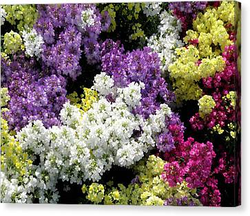 Many Colors Make A Beautiful Garden Canvas Print by Jean Hall