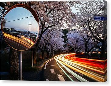 Korea's Roadside Blossoms Canvas Print by Roy Cruz