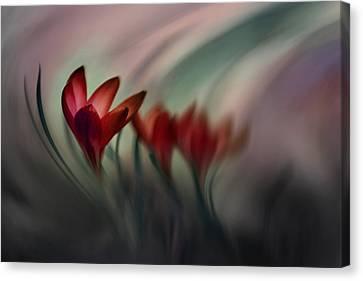 Crocus Flowers Canvas Print - Krokus by Doris Reindl