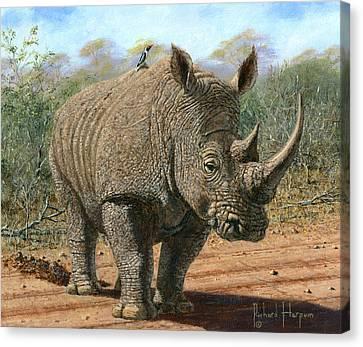 Kruger White Rhino Canvas Print by Richard Harpum