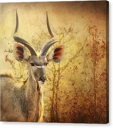 Kudo Canvas Print by Kim Andelkovic