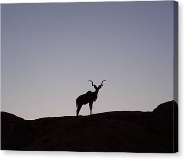 Kudu Silhouette At Nightfall Canvas Print by Noreen HaCohen