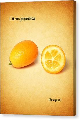 Kumquat Canvas Print by Mark Rogan