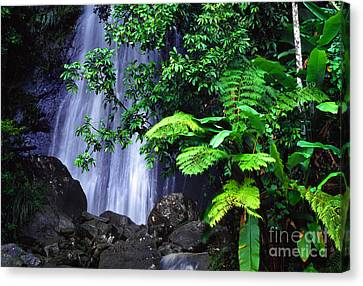 La Coca Falls Canvas Print by Thomas R Fletcher
