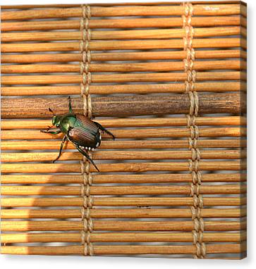 La Cucaracha The Bug Canvas Print by Ion vincent DAnu