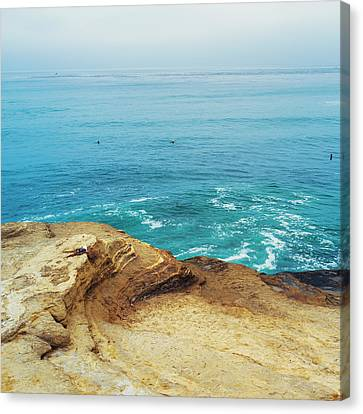 La Jolla Coast Seagull Nest Canvas Print by Tanya Harrison