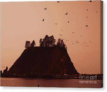 La Push Silhouette With Birds Canvas Print by Kym Backland