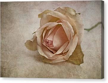 la vie en rose II Canvas Print by Claudia Moeckel