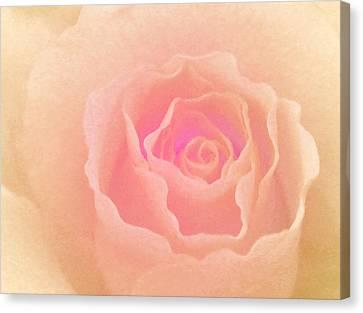 La Vie En Rose Canvas Print by The Art Of Marilyn Ridoutt-Greene