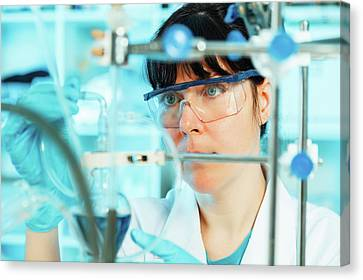 Lab Technician Using Lab Equipment Canvas Print