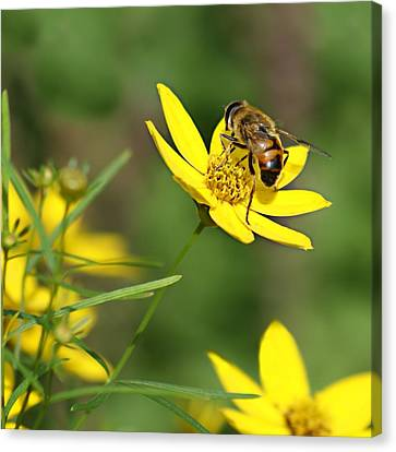 L'abeille Canvas Print by Nikolyn McDonald