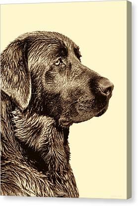 Labrador Retriever Dog In Sepia Canvas Print by Jennie Marie Schell