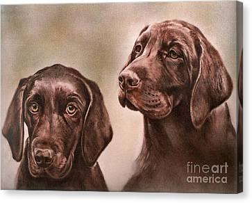 Labrador Retrievers Canvas Print by Gail Dolphin