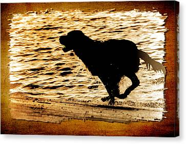 Canvas Print featuring the photograph Labrador Silhouette by Eleanor Abramson