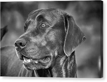 Labrador Sweetie Canvas Print