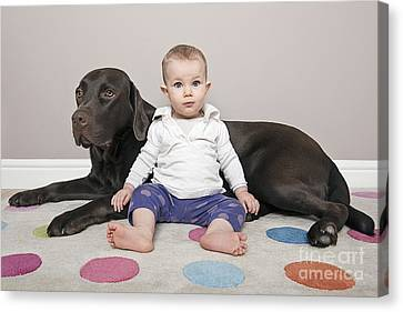Labrador With Baby Girl Canvas Print by Justin Paget