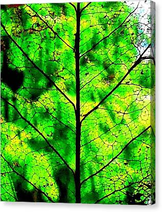 Lacey Leaf Canvas Print
