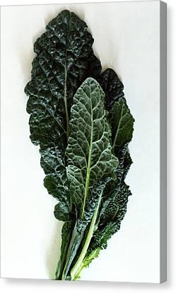 Lacinato Kale Canvas Print by Romulo Yanes