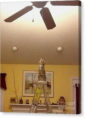 Ladder Cat Canvas Print