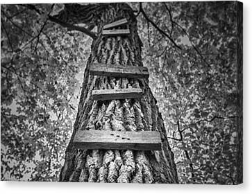 Maple Canvas Print - Ladder To The Treehouse by Scott Norris