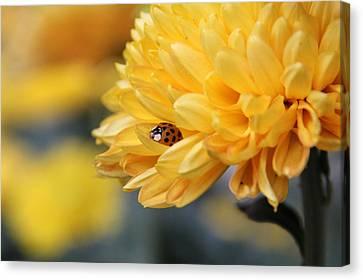 Lady Bug Canvas Print by Adrienne Franklin