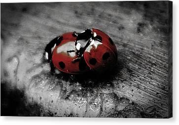 Lady Bug Love Canvas Print by Martin Newman