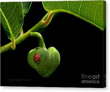 Lady Bug On Pond Apple Canvas Print
