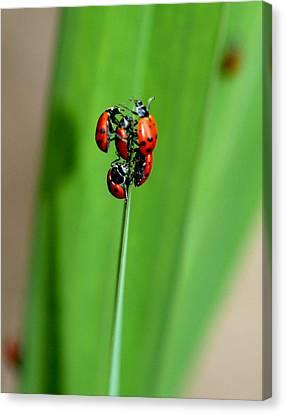 Lady Bug Social Canvas Print