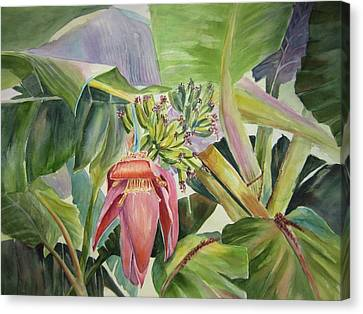 Canvas Print featuring the painting Lady Fingers - Banana Tree by Roxanne Tobaison