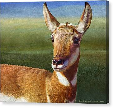 Pronghorn Antelope Canvas Print - Lady Pronghorn by R christopher Vest