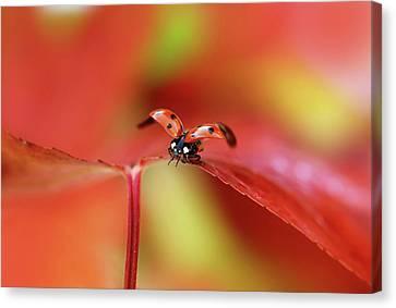 Ladybird In Autumn Canvas Print