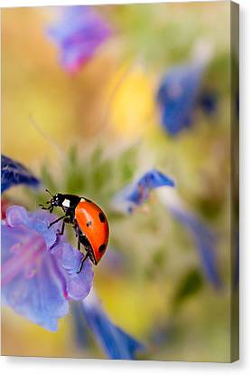 Ladybird Canvas Print by Meir Ezrachi
