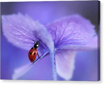 Ladybird On Purple Hydrangea Canvas Print