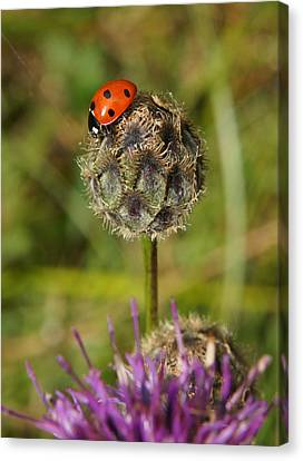 Canvas Print featuring the digital art Ladybird by Ron Harpham