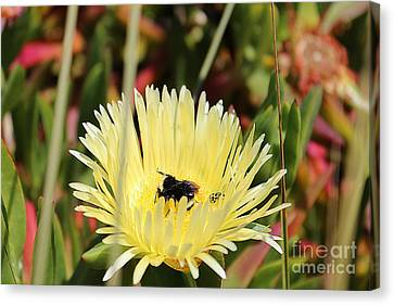 Ladybug And A Bumblebee Canvas Print by Kevin Ashley