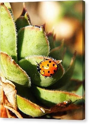 Ladybug And Chick Canvas Print by Chris Berry
