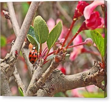 Ladybug And Crabapple Canvas Print by Rona Black