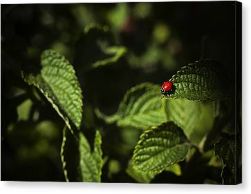 Canvas Print featuring the photograph Ladybug by Bradley R Youngberg