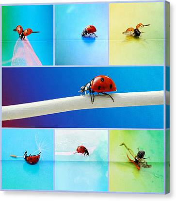 Ladybug Collage Canvas Print by Heike Hultsch