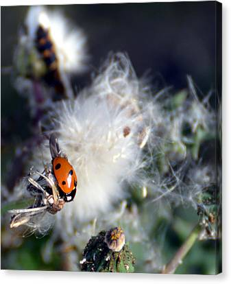 Canvas Print featuring the photograph Ladybug by Linda Cox