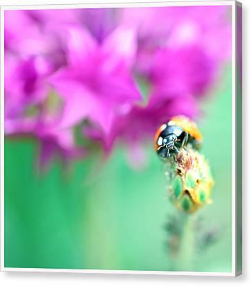Ladybug On Beautiful Bud Canvas Print