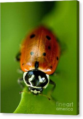 Ladybug On Green Canvas Print