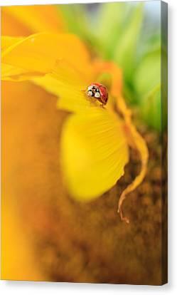 Ladybug Canvas Print by Rebecca Skinner