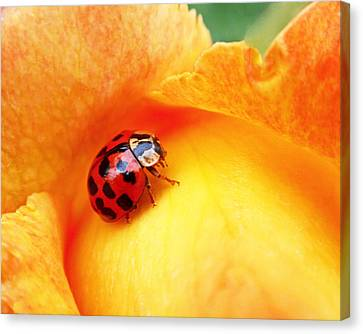 Ladybug Canvas Print by Rona Black
