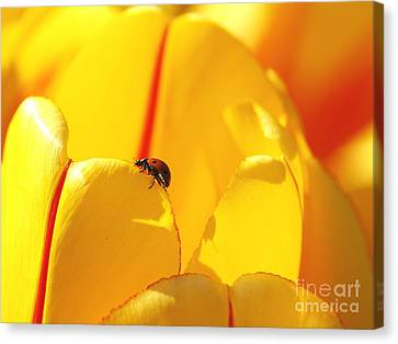 Canvas Print featuring the photograph Ladybug - The Journey by Susan  Dimitrakopoulos