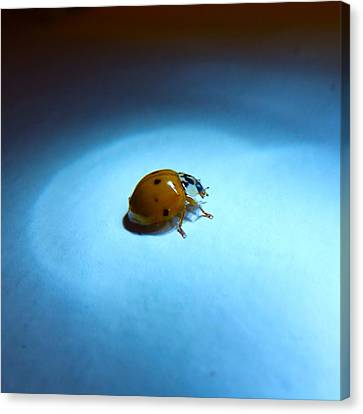 Ladybug Under Blue Light Canvas Print