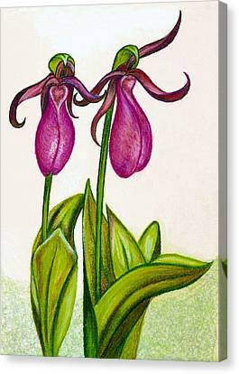 Lady's Slipper Canvas Print
