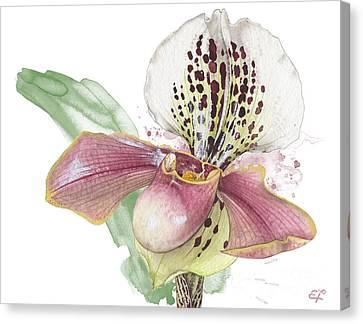 Ladys Slipper - Orchid 14 - Elena Yakubovich Canvas Print