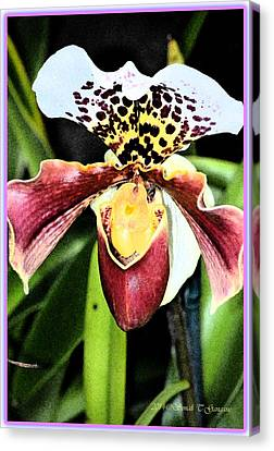 Lady's Slipper Orchids Canvas Print by Sonali Gangane